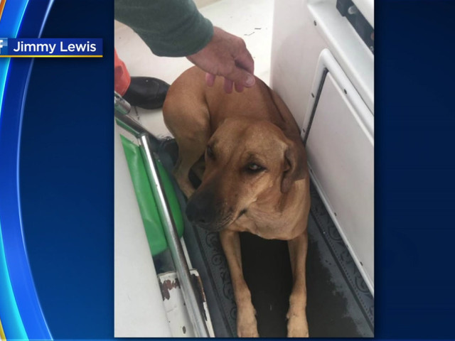Man Finds Dog Missing For Nearly Half A Day In The Middle Of Biscayne Bay