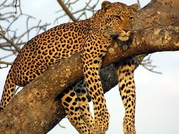 Goway Travel Confirms New Kenya Safari Departures for 2018