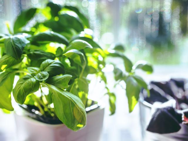 5 of the best indoor garden systems for growing herbs and veggies