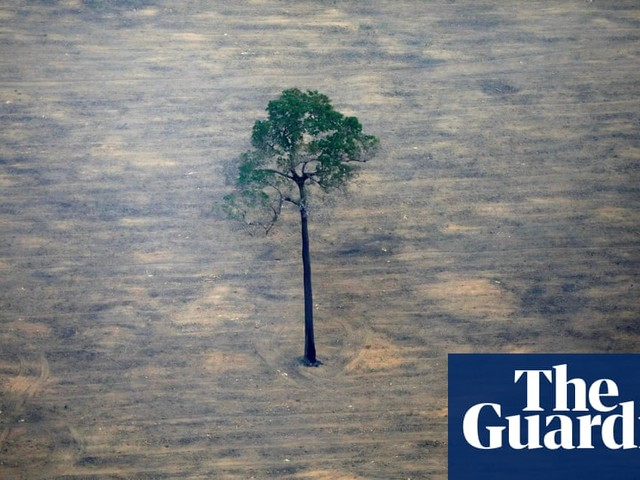 Brazil's Amazon deforestation this year nearly size of Puerto Rico, says agency