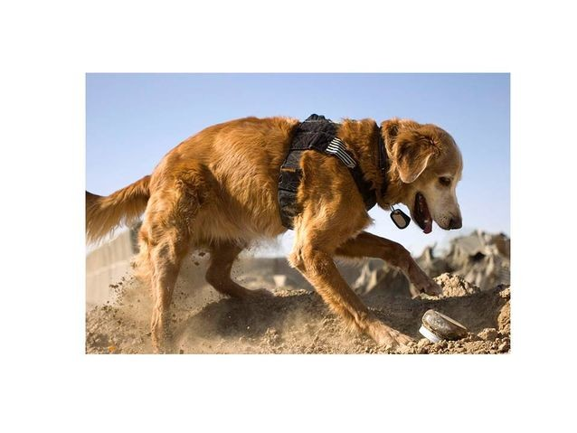 Could a Dog Be an Archaeologist's Best Friend?