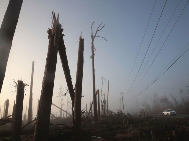 Tough Choices For Florida Timber Farmers A Year After Hurricane Michael