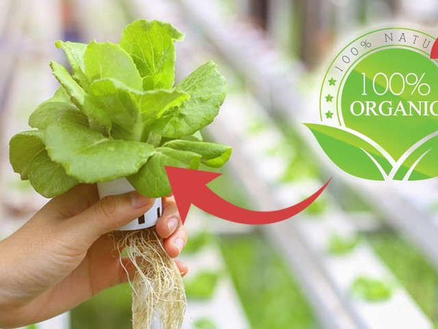 Will Inclusion of Hydroponics Be the Death Knell of Organic Standards?