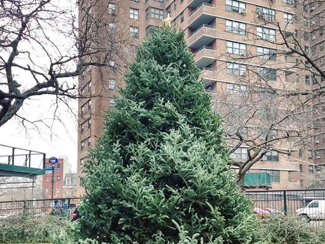 Christmas trees cost as much as $6,500 in New York City
