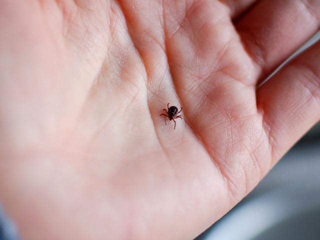 Expanding Tick Control Methods