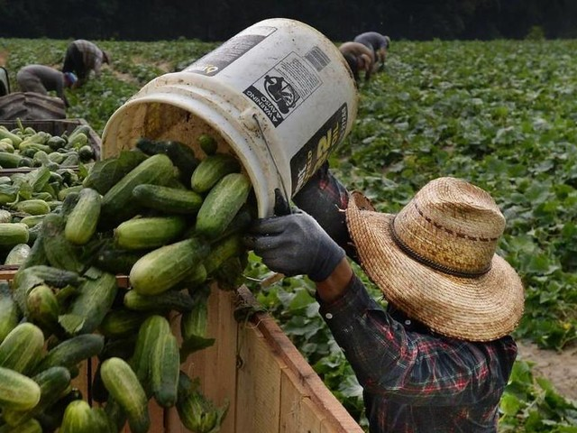 Court temporarily blocks anti-union law in North Carolina, but fight isn't over for farm workers
