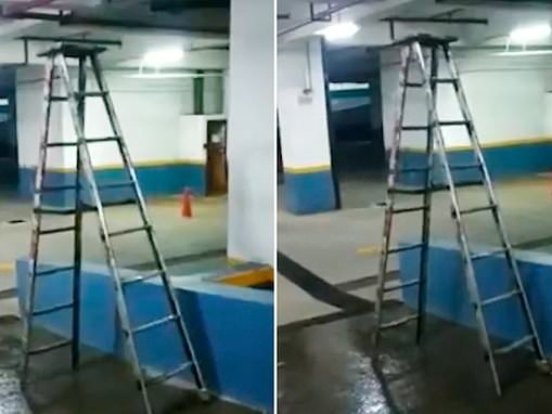 Well, it is a STEP ladder! Astonishing moment ladder walks along by itself
