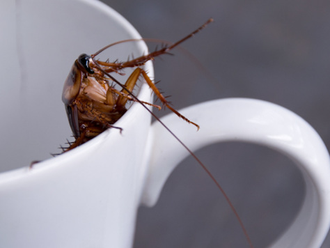 Cockroach Milk Is The New Superfood According To Scientists