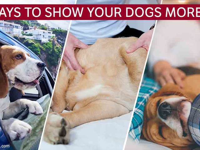 10 Ways to Show Your Dog Love, No Matter How Crazy Life Gets