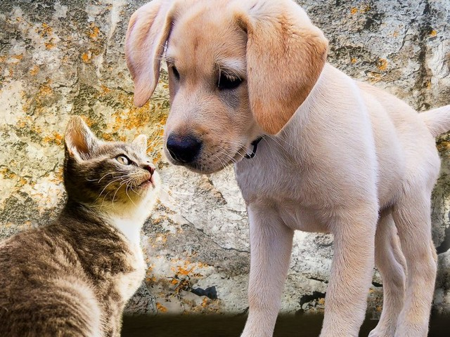 Puppies and Kittens Trump the Constitution