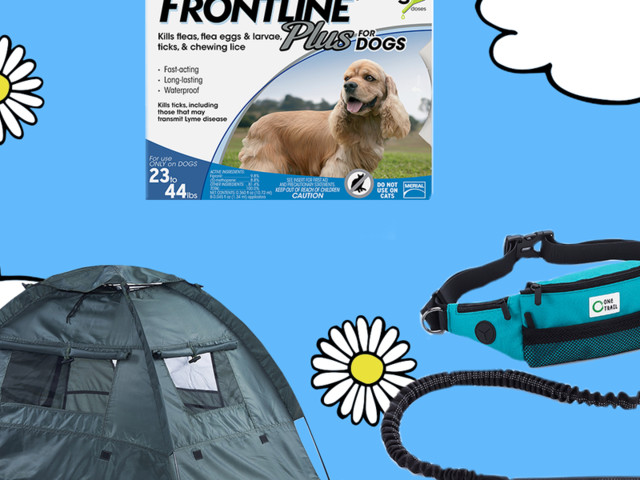 8 Things To Get You And Your Dog Ready For Summer