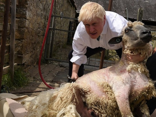 Boris Johnson's government has a £500 million plan to buy slaughtered lambs in event of no-deal Brexit as farmers warn of 'civil unrest'