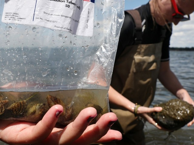 DNR launches high-tech study of food webs in Minnesota's largest walleye lakes