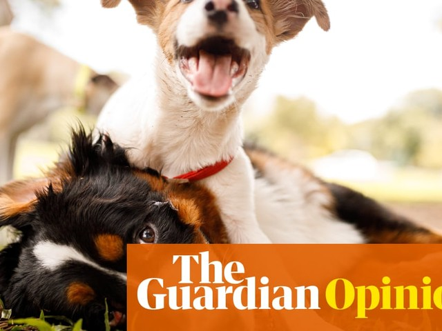 Just got a puppy? Here's what a terrier called Arthur taught me about love   Hadley Freeman