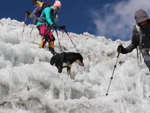 Stray Dog Follows Climbers 23,000 Feet Up A Mountain