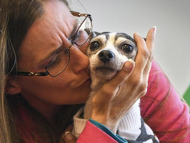 VIDEO: Dog Lost Since 2007 Found over 1K Miles Away in Pittsburgh