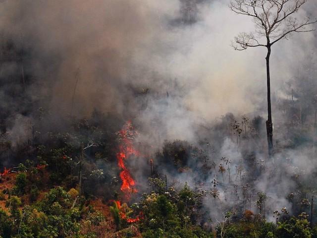 Amazon fires: Brazil-EU trade deal threatened