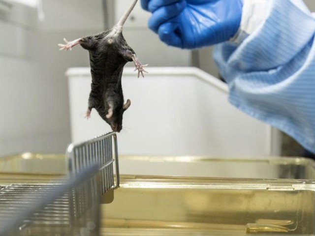 Chinese military 'engineered mice with humanized lungs' in 2019 to test viruses on them: Bombshell report