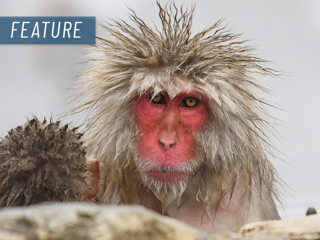 Here & there: Lessons in frustration from snow monkeys and ducks
