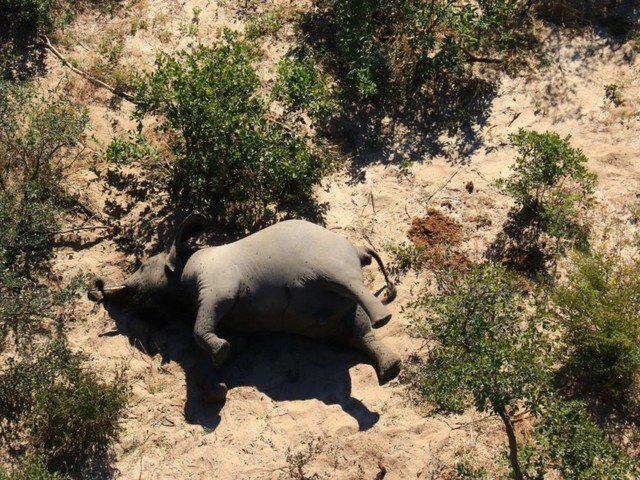 'A Species That We Cannot Afford To Lose': Hundreds Of Elephants In Botswana Are Mysteriously Dy