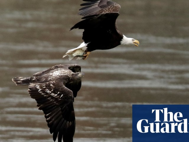 The week in wildlife - in pictures