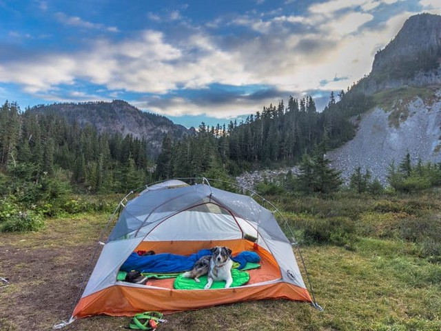 6 Affordable Vacations to Take with Your Pet