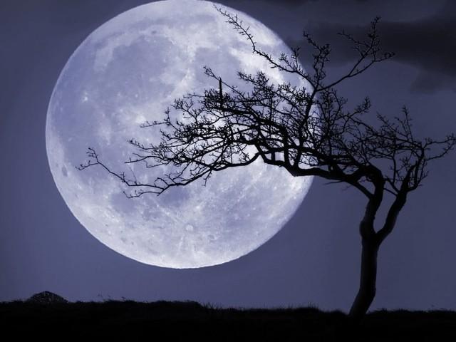 Full Moon In Taurus: Growth & Perseverance