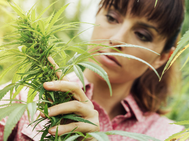 should marijuana be allowed to sell Have you thought about buying marijuana online if you frequent marijuana websites, then i'm sure you have noticed a growing trend of people trying to sell marijuana.