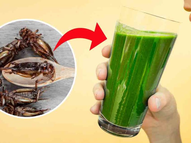 This bug juice has more antioxidants than orange juice