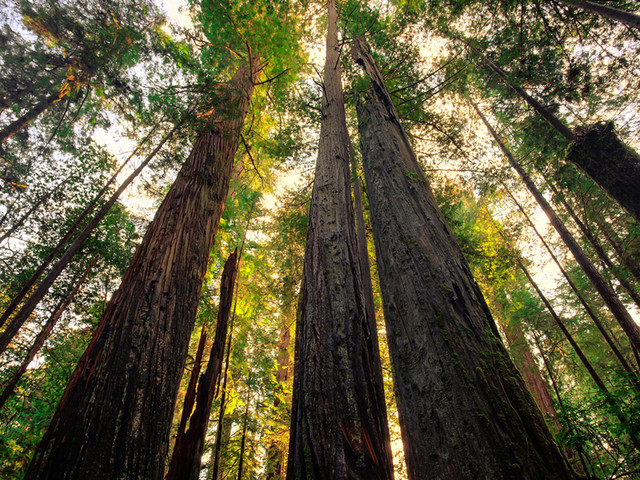 Attorney General Becerra Denounces Trump Administration Rollback of Regulations Protecting National Forests