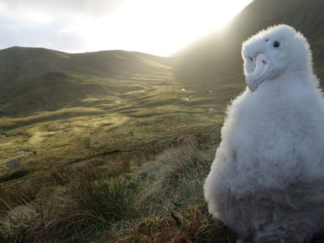 In Photos: Mice Brutally Attack and Devour Albatross on Gough Island