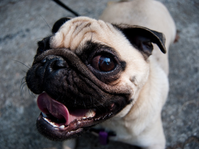 Study reveals dogs are programmed to want to us to be happy