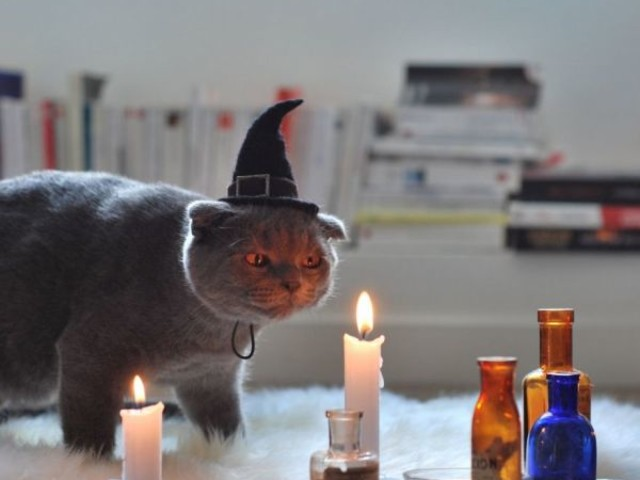 A Collection of Delightful Cat Halloween Costumes