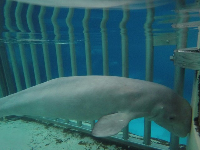 """""""Marineland tried to hide it. They won't announce whale deaths unless we bust them in the act."""""""