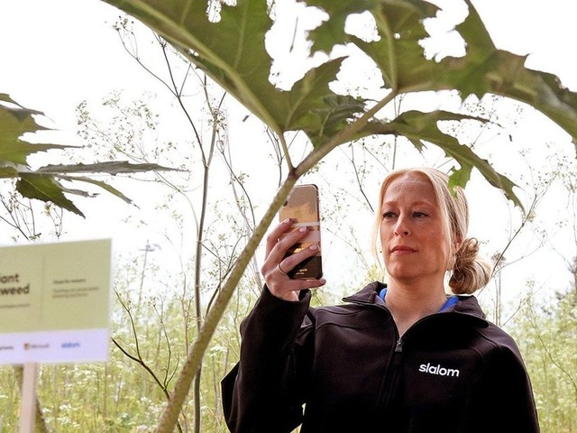 Noxious weeds? Now there's an App for that in King County