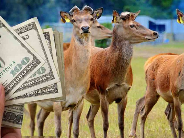 Diseased Deer Farms Subsidized