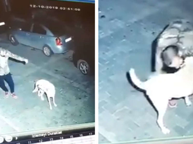 Security Camera Catches Man Sharing Adorable Moment With Stray Dog
