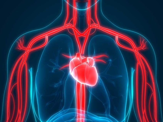 Blood Flow Restriction Training for Muscle Mass Maintenance
