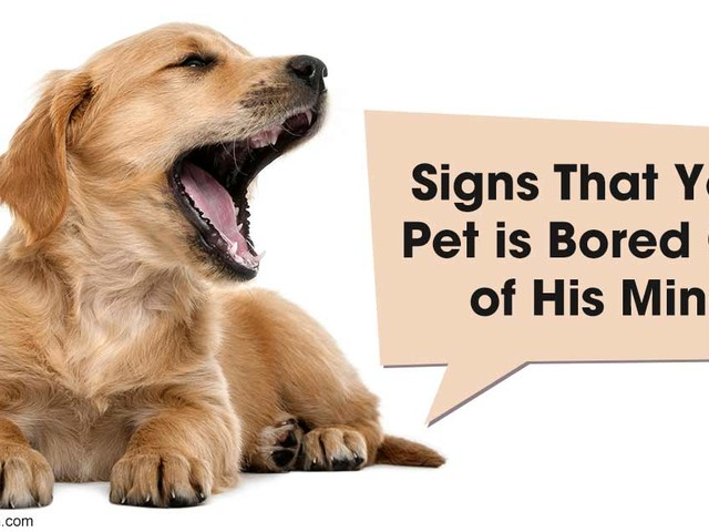 8 Signs Your Pet Is Bored Silly