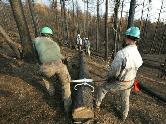 Boy Scout ranch focuses on wildfire recovery as season nears