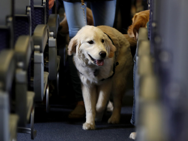 Service dogs only: New rule to ban emotional-support animals on planes