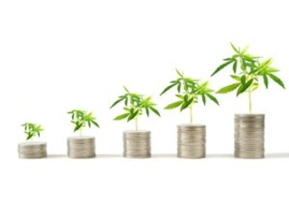 Top Weed Stocks to Watch in October 2018