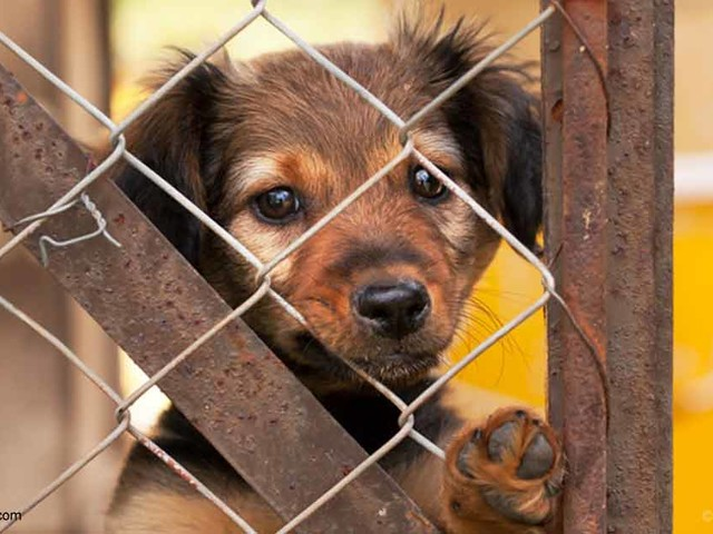 Dogs From Irresponsible Breeders, Puppy Mills Have More Behavioral Problems