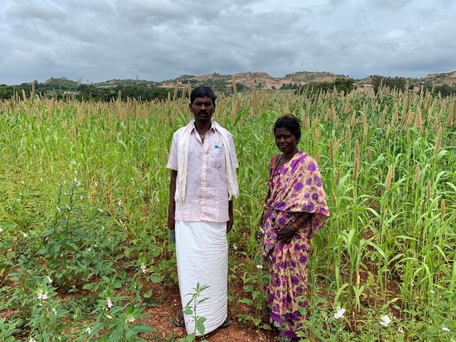 Indian farmers learn how to revive soil contaminated by mines