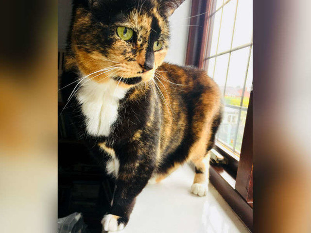 Cat Left Behind When Her Family Moved Has Waited 200 Days For A Home