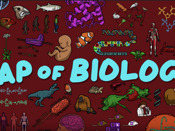 The Map of Biology: Animation Shows How All the Different Fields in Biology Fit Together