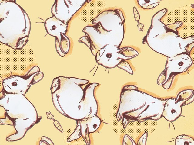 Why Are Rabbits So Hot Right Now?