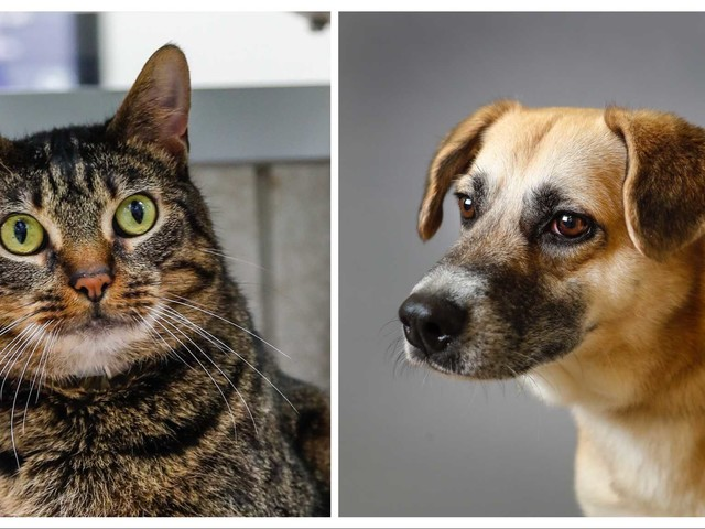 Pets of the Week:Meet Lana and Layla, the Houston Humane Society's longest-staying cat and dog