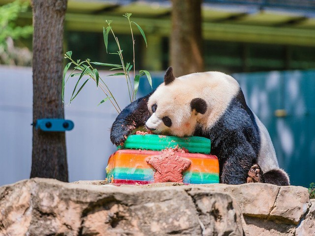 6 Reasonably Priced Spots for Kids' Birthday Parties