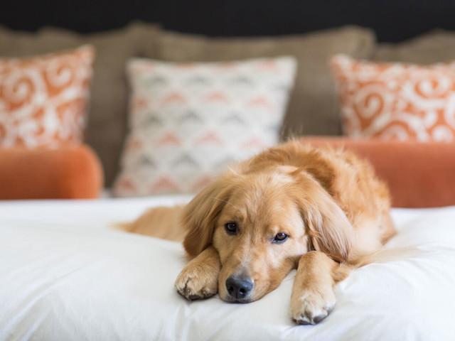 Top 10 Pet-Friendly Hotels in Europe